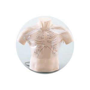 聴診技術教育モデル/看護実習モデル人形 「ちょうしんくん」 スピーカー内蔵 胸部カバー付き M-164-0